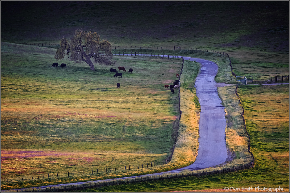 evening light, San Benito County, California