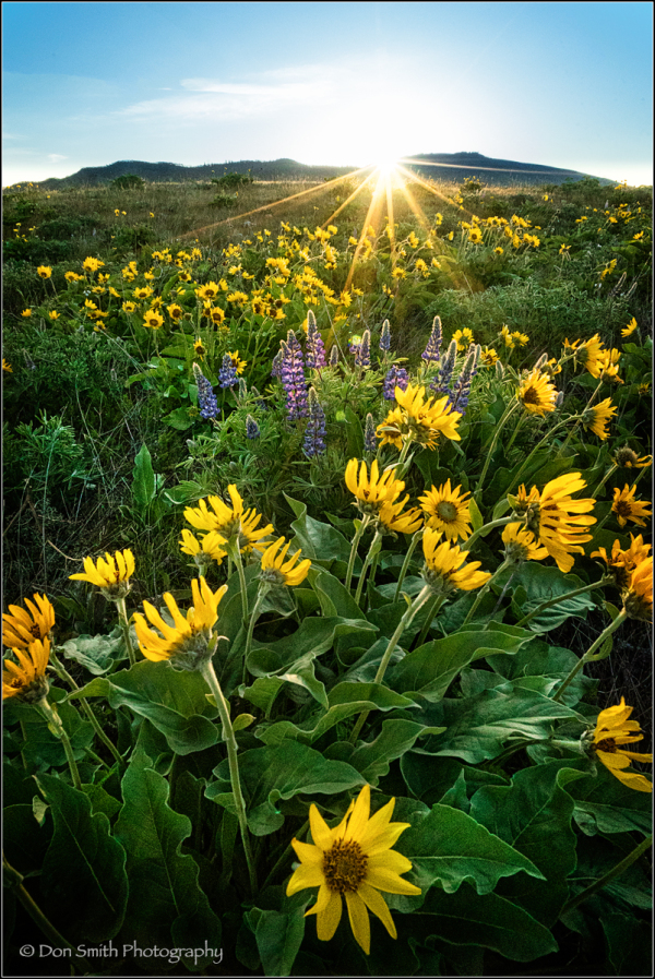 Rowena Crest, Tom McCall Preserve, Oregon, Auto IS