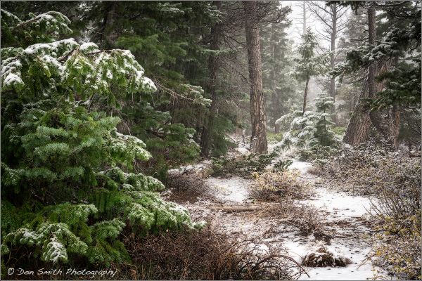 Sesaon's first snow at Bryce Canyon National Park,