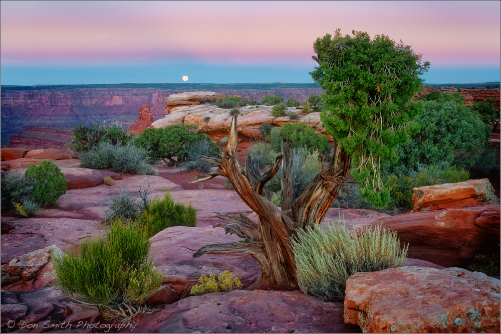 Moonset, Dead Horse Point State Park, Utah