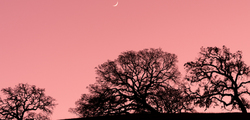 Crescent Moon and Oaks, Santa Clara Valley