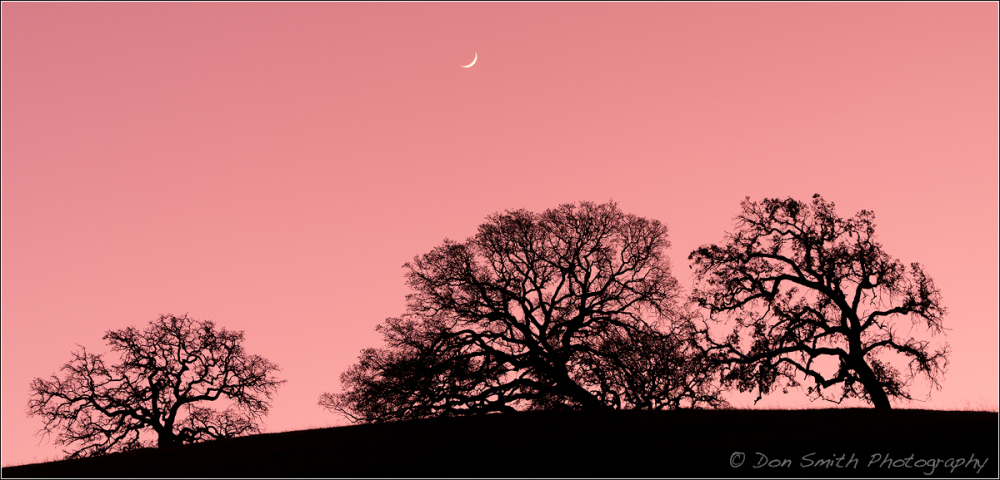 Crescent Moon and Oaks, Santa Clara Valley