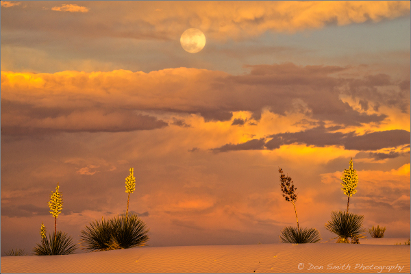 Moonrise Over Yuccas, White Sands New Mexico