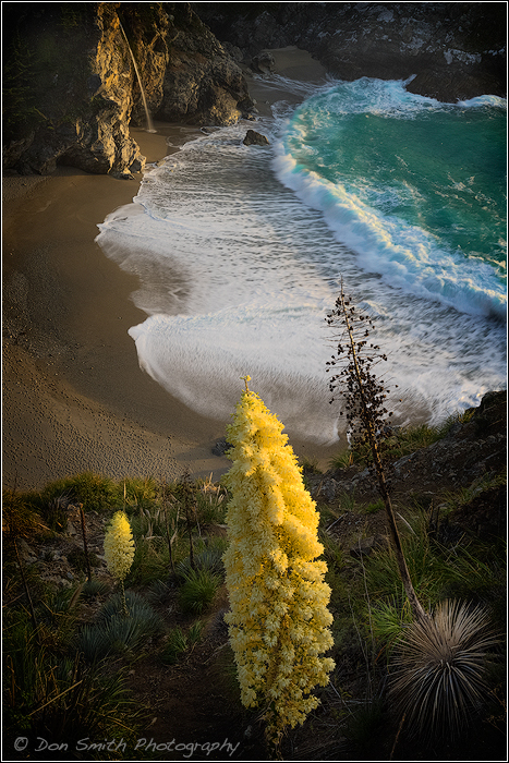 Yucca and McWay Fall - Big Sur Coast