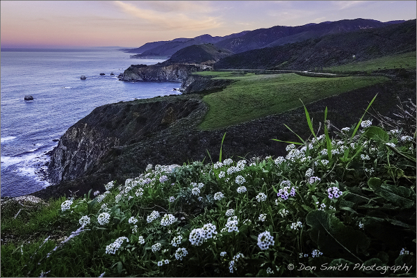 Winter Wildflowers at Hurricane Point, Big Sur