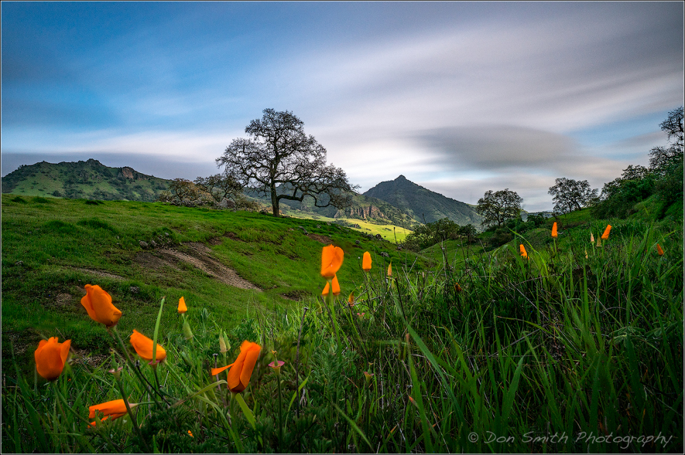 Golden Poppies and Santa Ana Peak