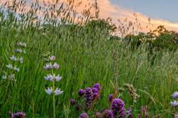 Wildflowers Against Evening Sky