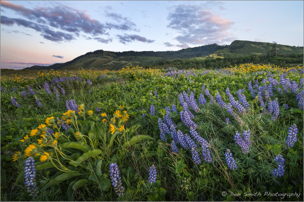 Spring Evening on Rowena Crest, Oregon