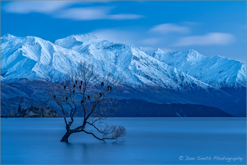 Lone Willow, Lake Wanaka, New Zealand