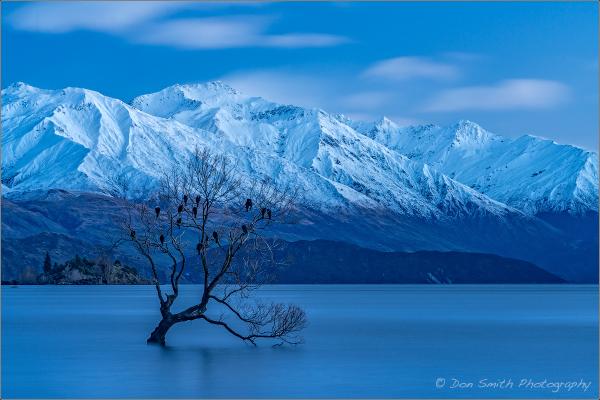 Lone Willow, Lake Wanaka, New Zealand