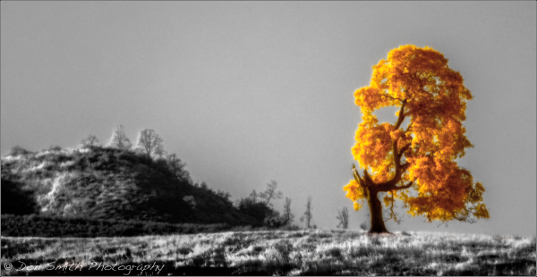 California Oak, False Color Infrared, Pinnacles NP