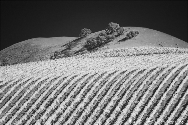 Vineyards in Infrared