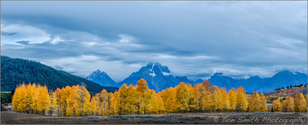 Cottonwoods and Mt. Moran, Grand Teton NP