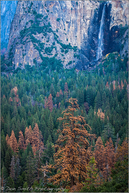 Why Are Our Forests Dying? Yosemite National Park