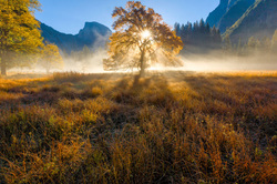 Fall Morning Sunrise, Elm and Half Dome, Yosemite