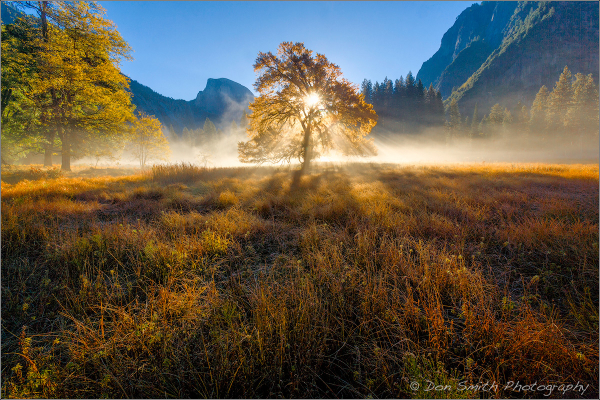 Fall Morning Sunrise, Elm and Half Dome, Yosemite