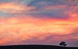 Dusk Light and Oak, Santa Clara Valley
