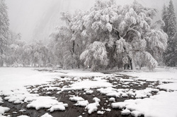 Snow Day, Yosemite National Park