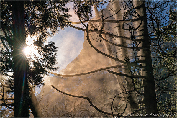 Steamy Pines, Yosemite National Park