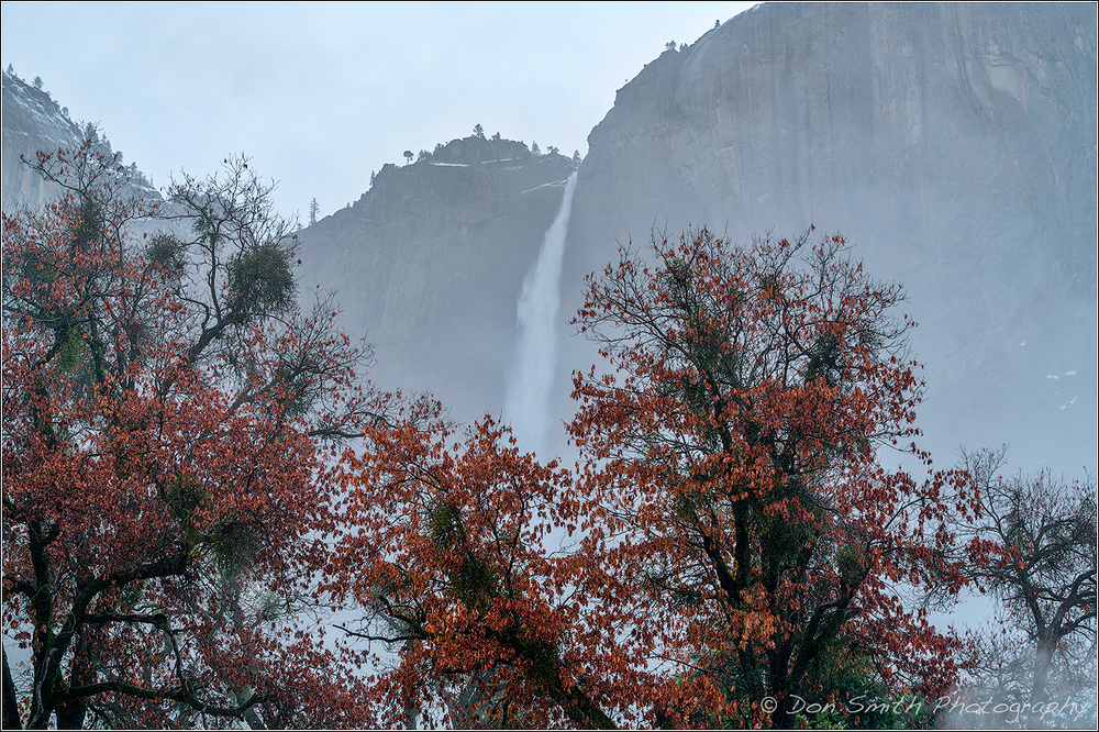 Upper Yosemite Fall and Black Oak