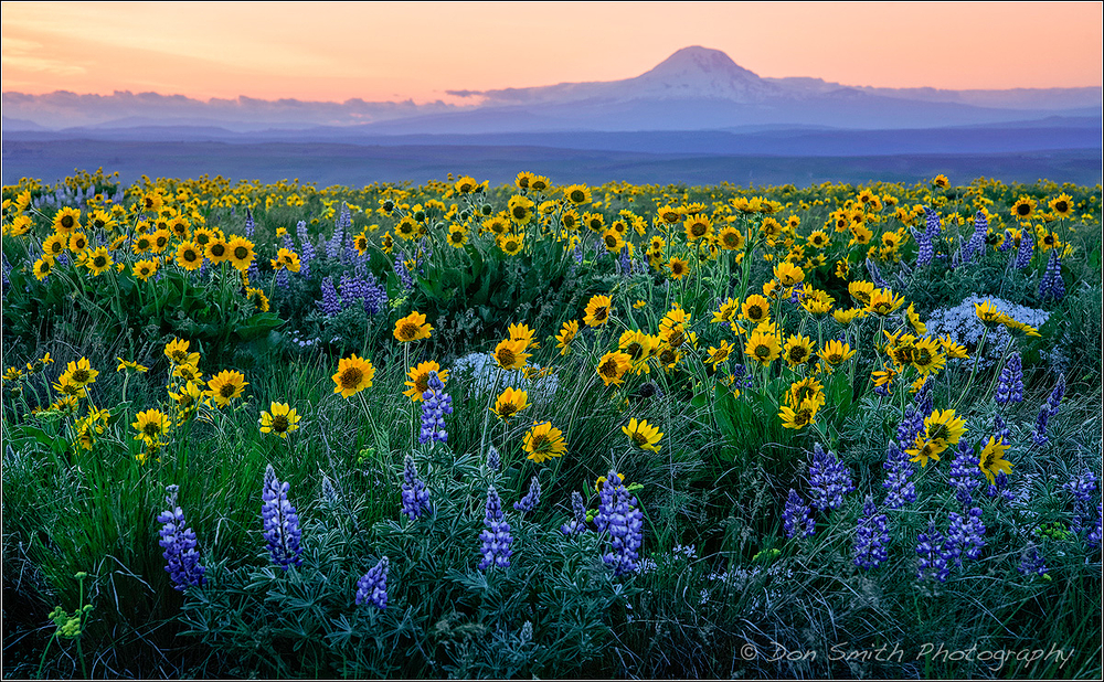 Dusk and Wildflowers With Mt. Adams