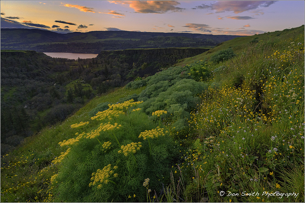 Spring Wildflowers, Rowena Crest, Oregon