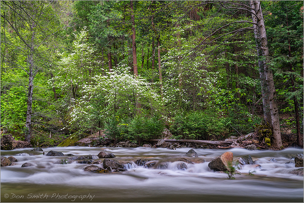 Dogwood and Tenaya Creek, Yosemite NP