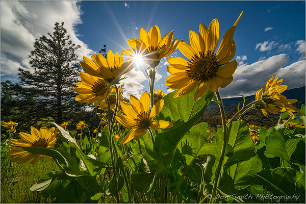 Sony 12-24mm in Oregon's Rowena Crest