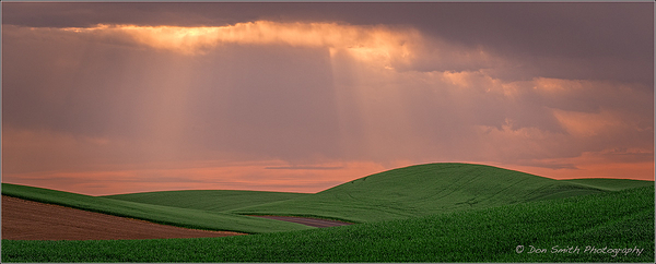 Sunrise Beams and Wheat Fields, Palouse