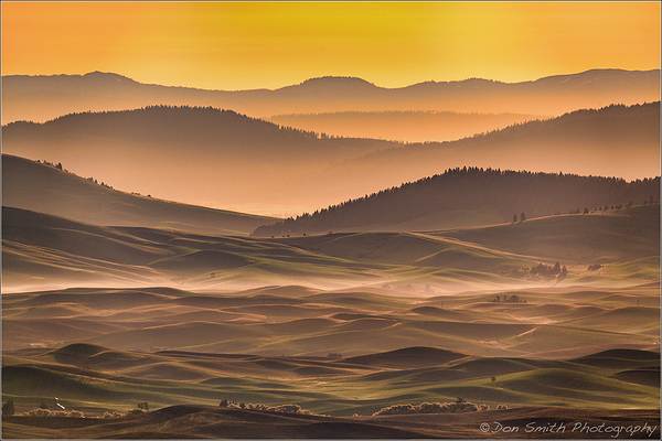 Misty Morning at Palouse