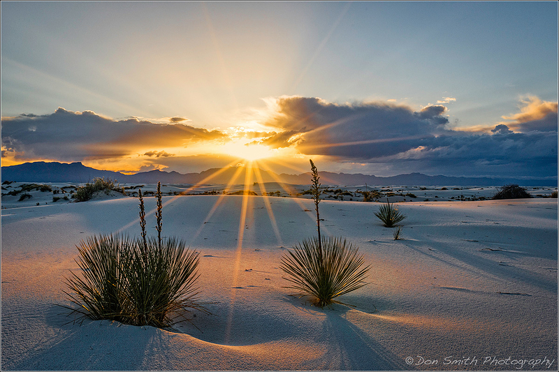 Sunset and Yuccas, White Sands NM