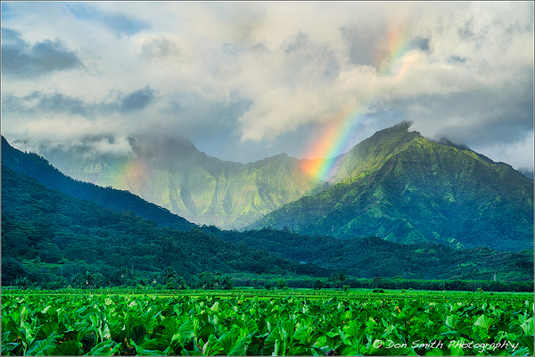 Double Rainbow Over Taro Fields :: Kauai