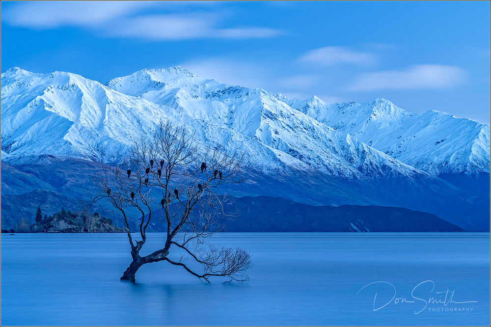 Wanaka Willow and Southern Alps, New Zealand