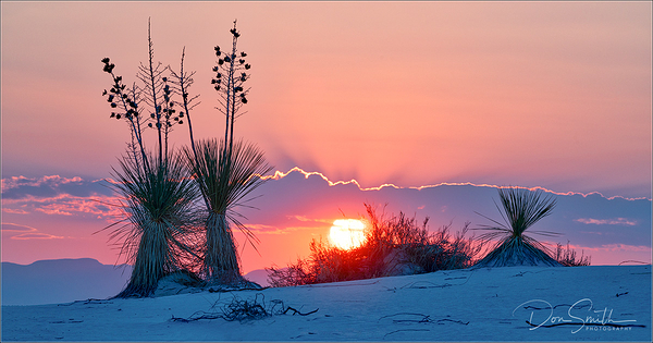 White Sands Sunset and Yuccas