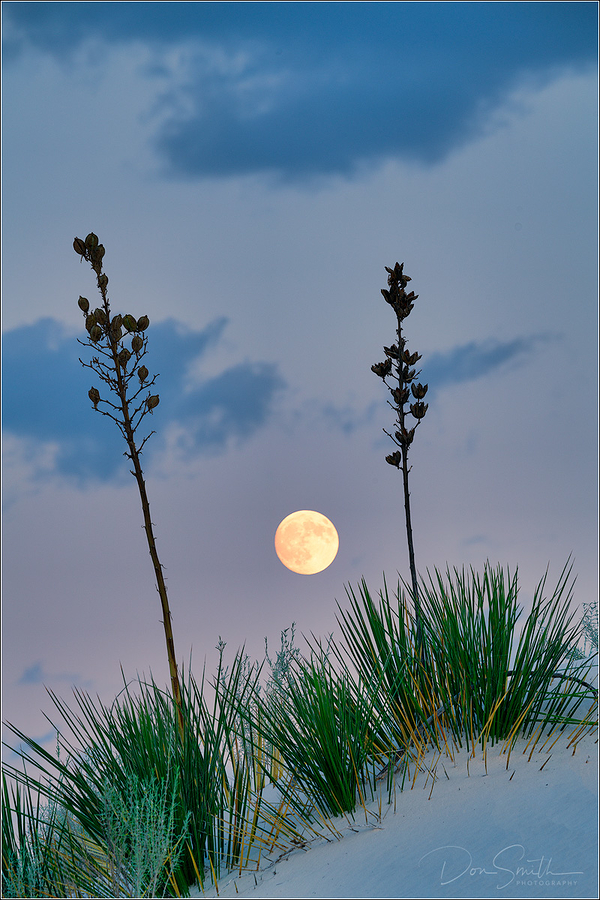 Rising Moon, yuccas, White Sands NM