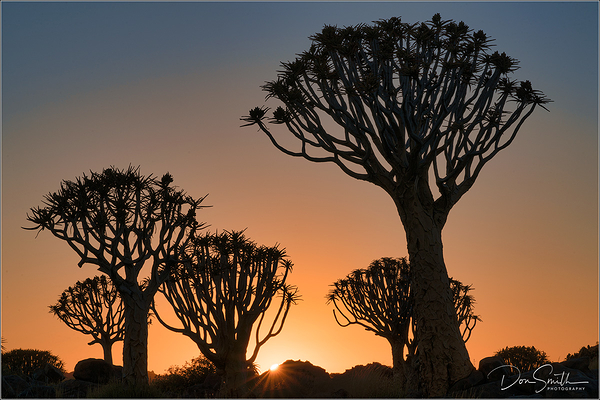 The Quiver Tree Forest, Namibia