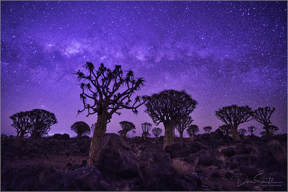 Milky Way Galactic Center Over Quiver Tree Forest