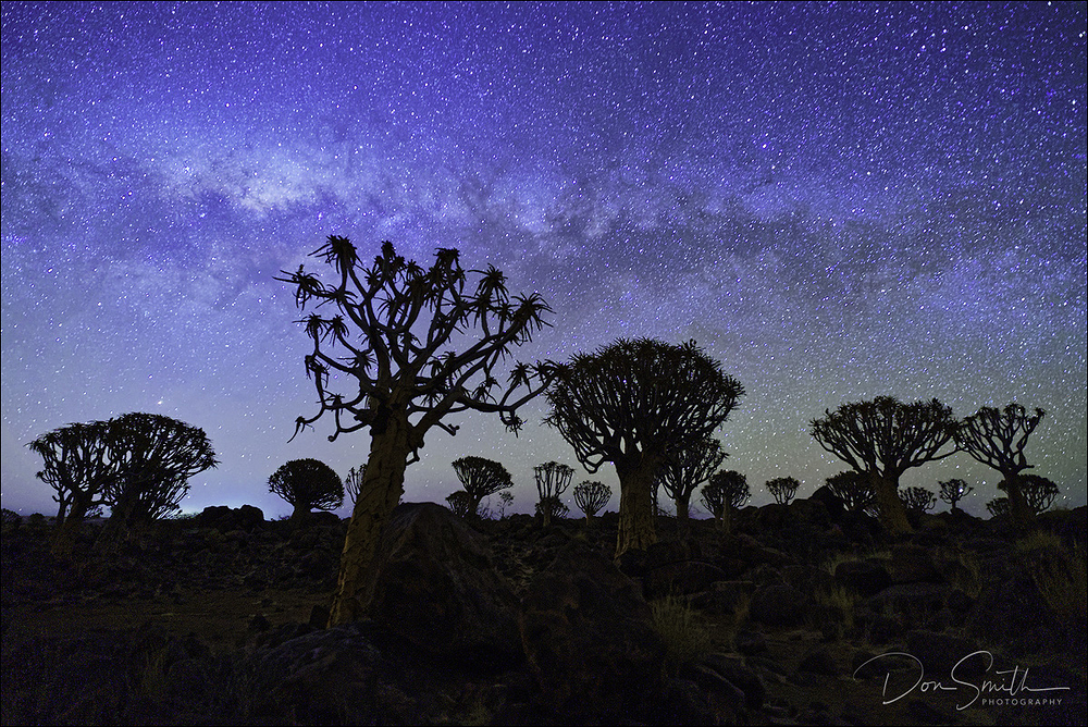 Milky Way Over Quiver Trees, Namibia, Africa
