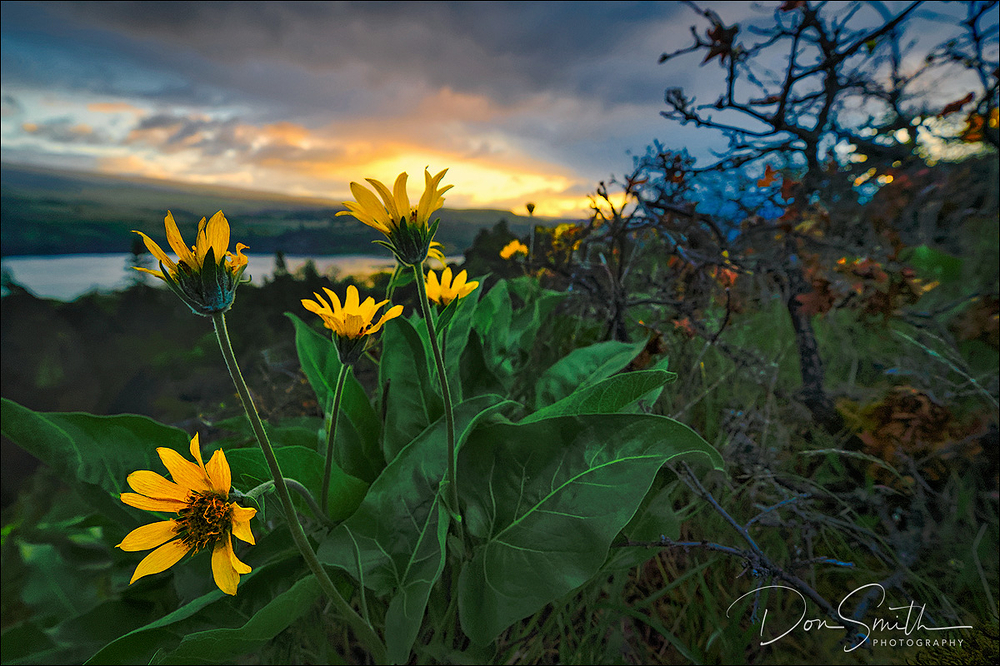 Sunrise and Wildflowers, Memaloose State Park, OR
