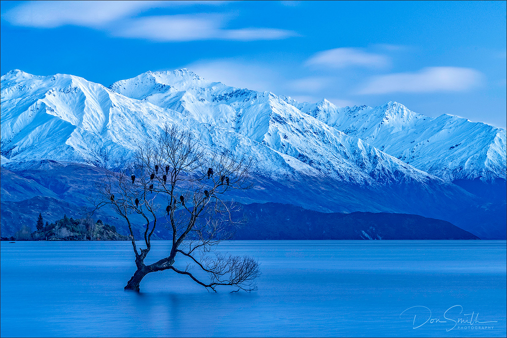 Wanaka Willow, South Island, New Zealand