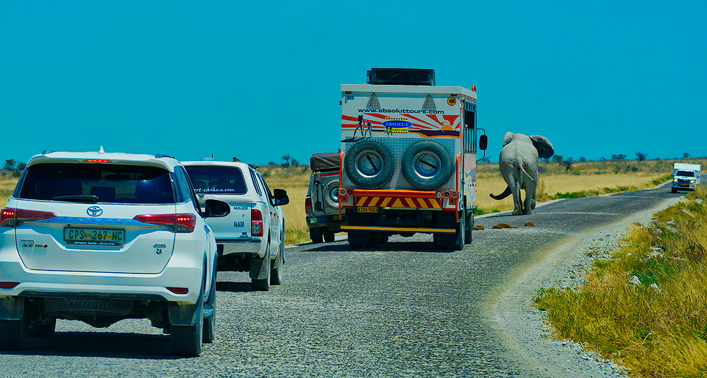 Namibian Traffic Jam