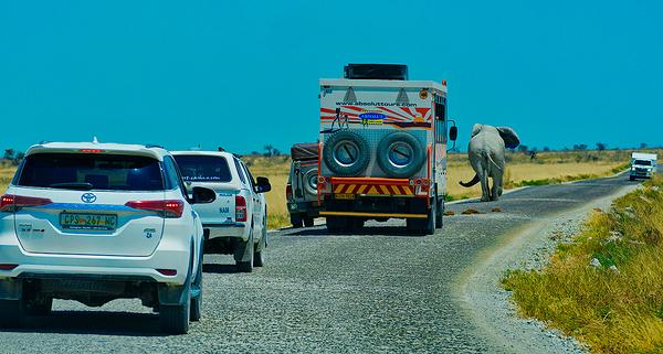 Namibian Traffic Jam