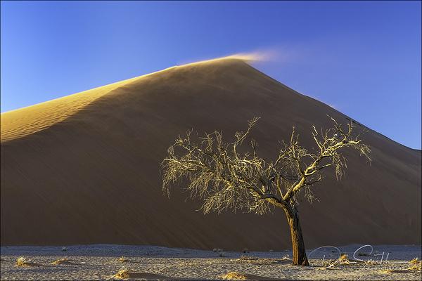 Dune 45, Sossusvlei National Park, Namibia