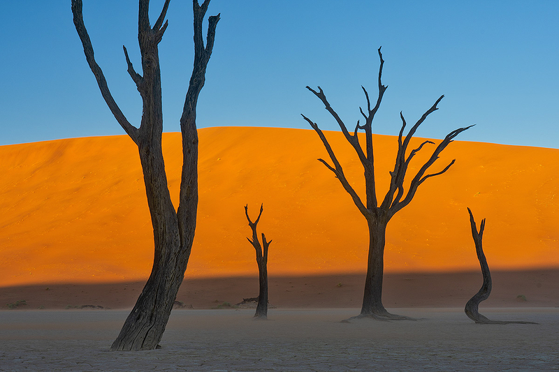 Camel Thorn Trees at Sunset, Deadvlei, Namibia
