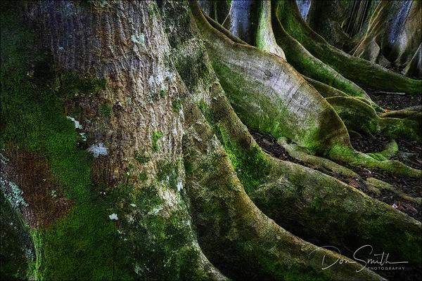 Sacred Forest, Rudraksha Trees, Kauai