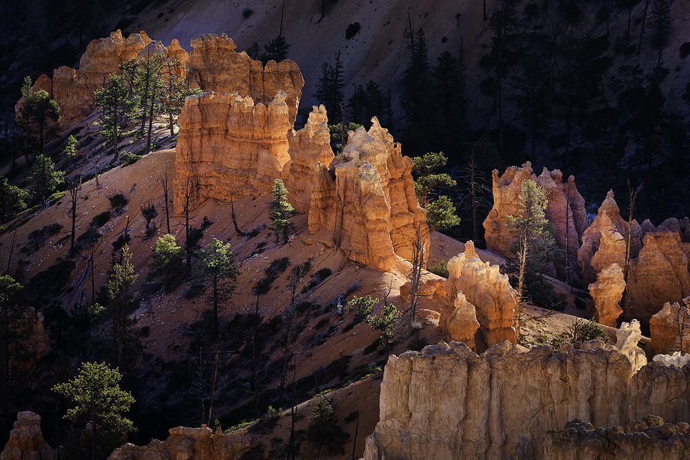 Glowing Hoodoos, Bryce Canyon, Utah