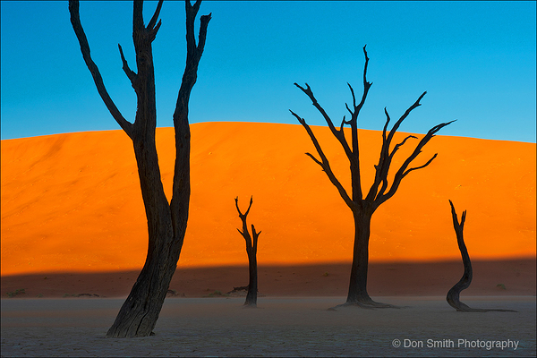 Dancing Camel Thorn Trees, Deadvlei, Namibia