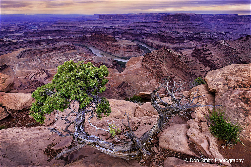 Juniper and Colorado River, Dead Horse, Utah