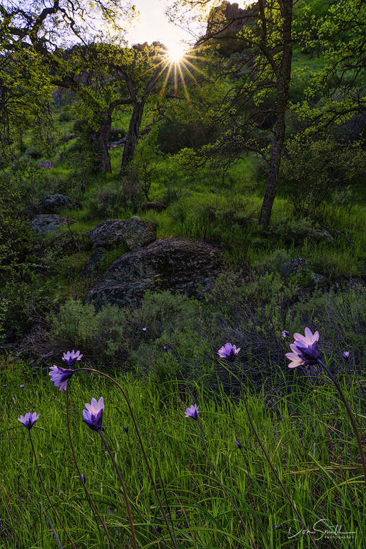 Spring Wildflowers at Pinnacles National Park