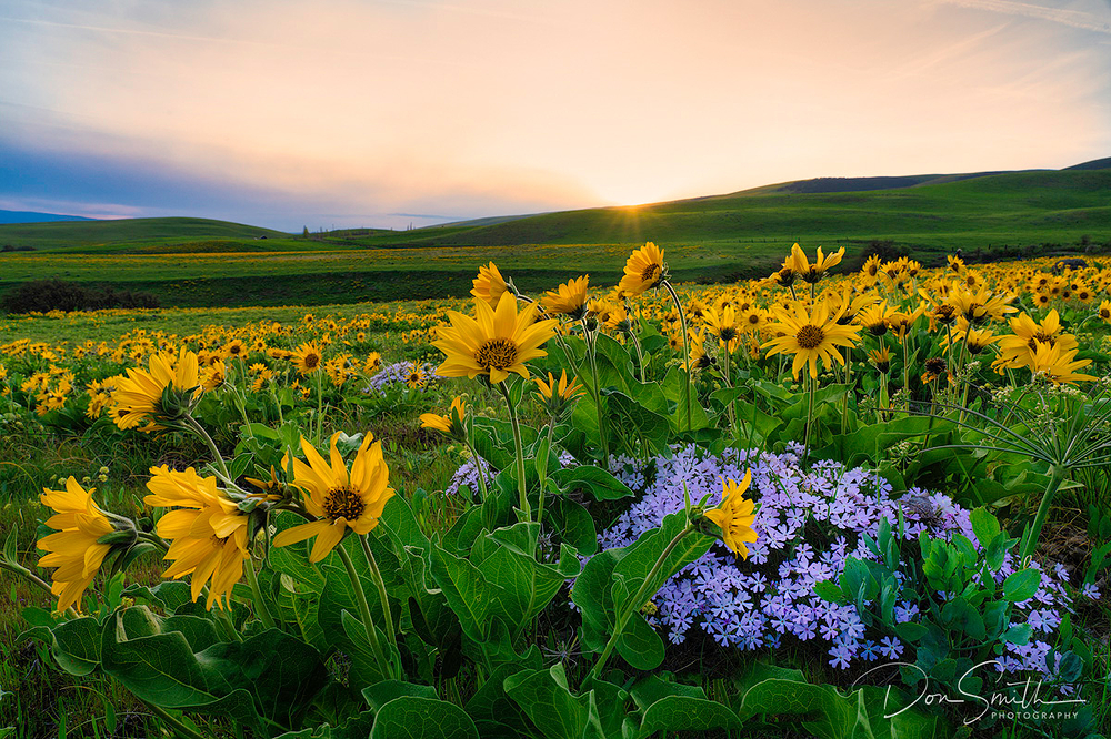 Wildflowers at Dalles Mountainn Ranch, Washington